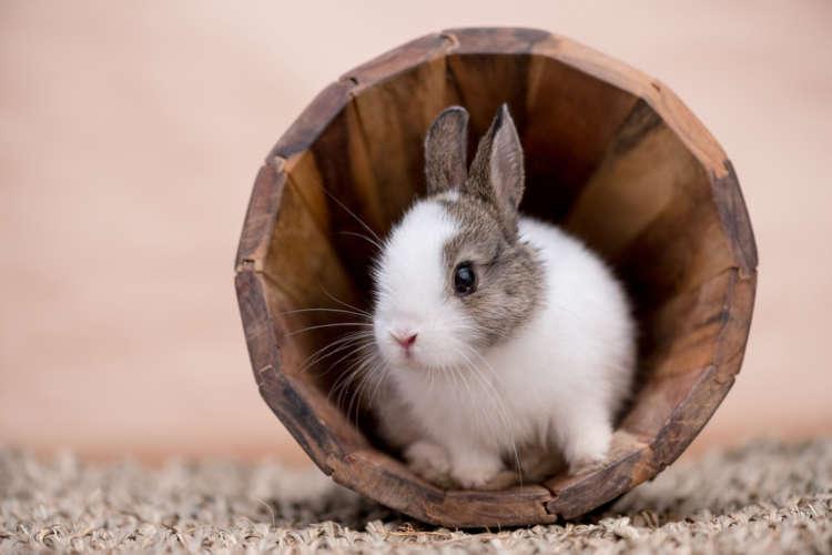 ウサギが突然ケージの中を走り回る その理由と対策