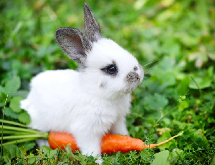 ウサギの特徴や性格、飼い方について