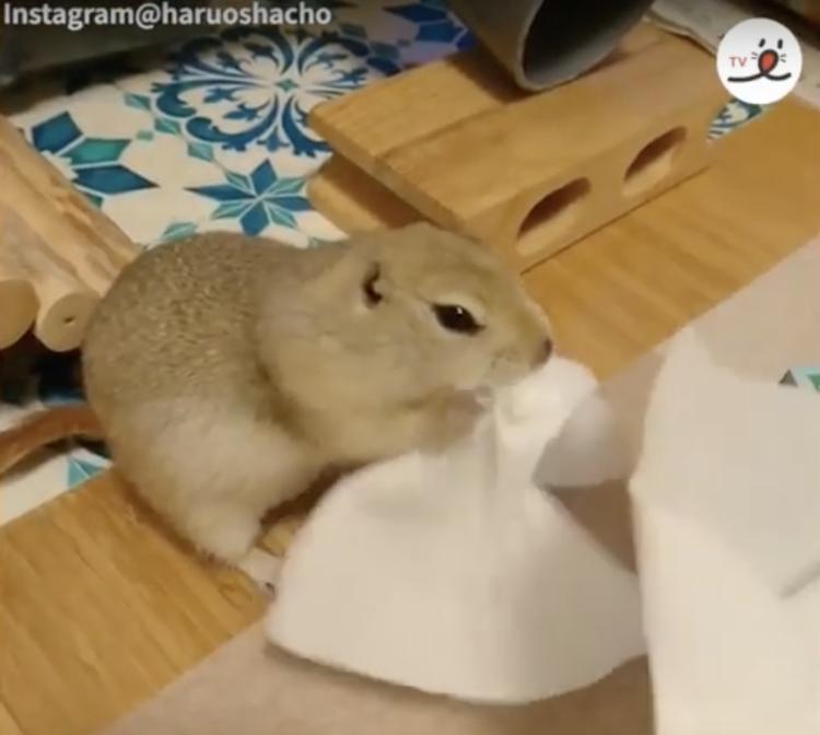 Chipmunk making his home!