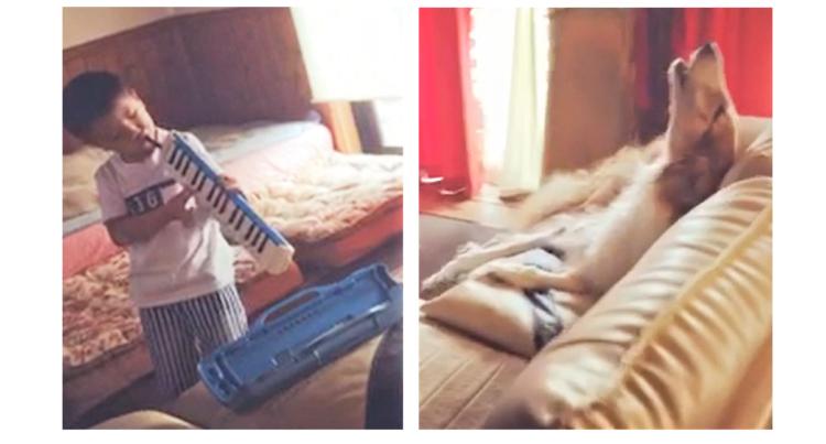 【アオーン♪】男の子の演奏に合わせて一生懸命に歌うワンコたち! 楽しい演奏会にホッコリ(*´ω`*)