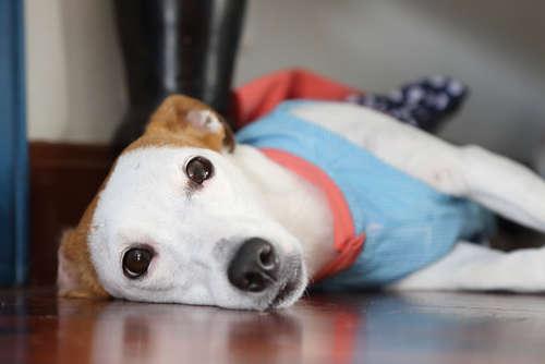 犬に空調は必要? 犬にとっての適温と暖房器具の使用法について