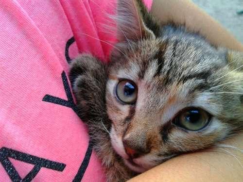 猫の角膜潰瘍 考えられる原因や症状、治療法と予防法