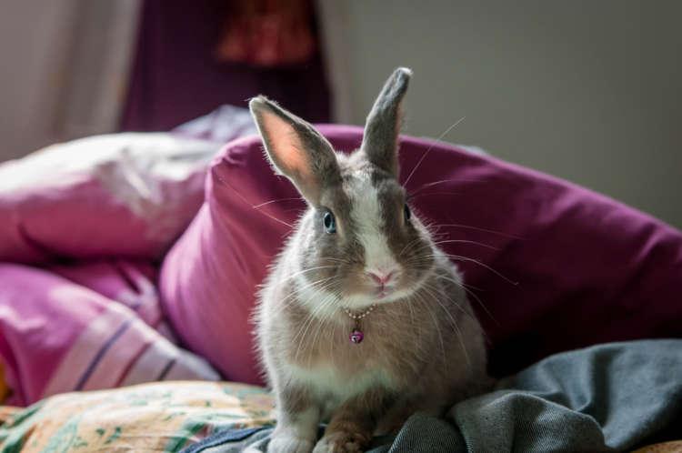 ウサギの寿命について。長生きしてもらうためにできること