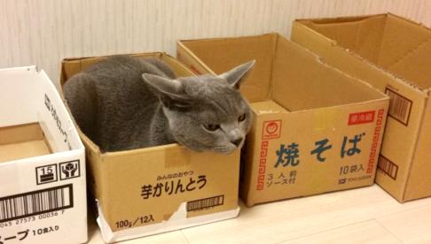 沢山の箱の中でも『お気に入りの箱』にしか入らない猫! そのこだわりが凄いと話題に…♡(4枚)
