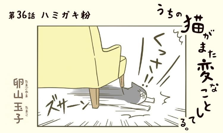 第36話:ハミガキ粉