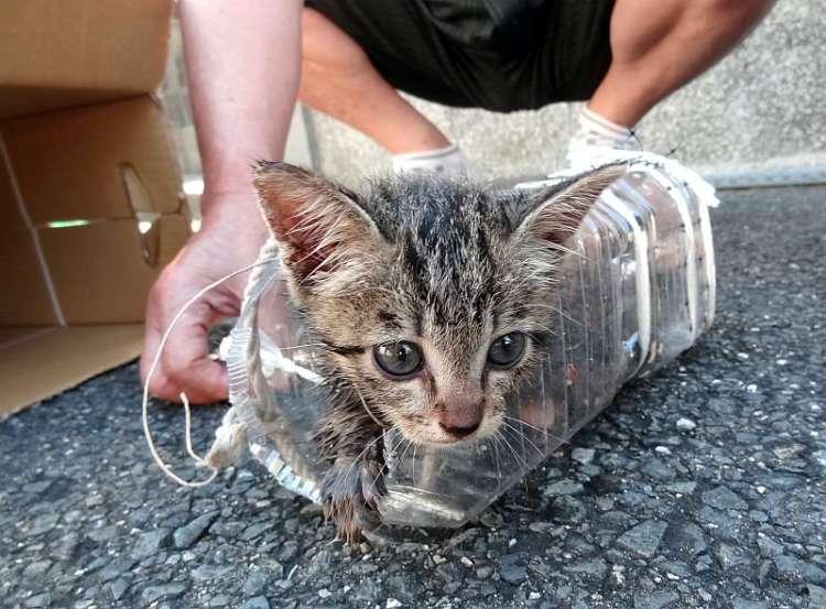 【奇跡の救出劇】道路の地下3メートルに迷い込んだ子ネコ。救出され、幸せになった姿に胸が熱くなる。
