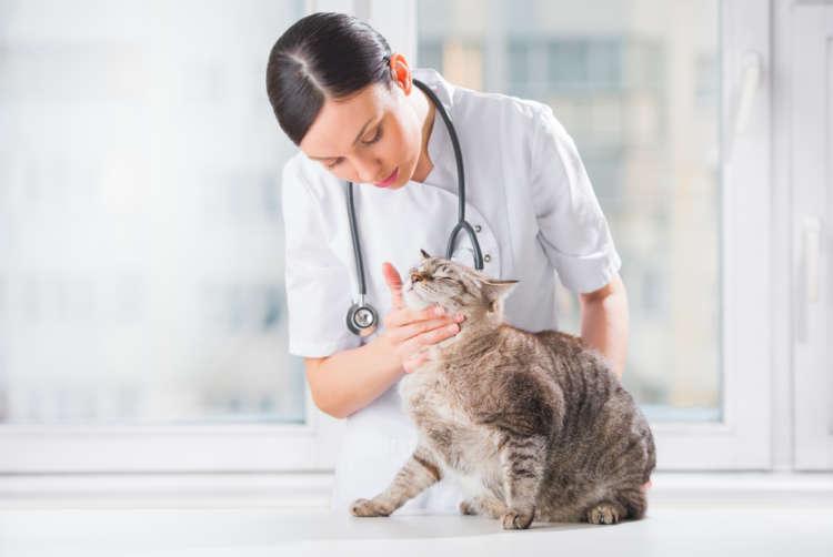 愛猫の万が一に備えて。動物病院でかかる費用とペット保険の活用方法