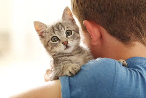 喘息持ちでも猫は飼える? 飼うためにできることと注意点について