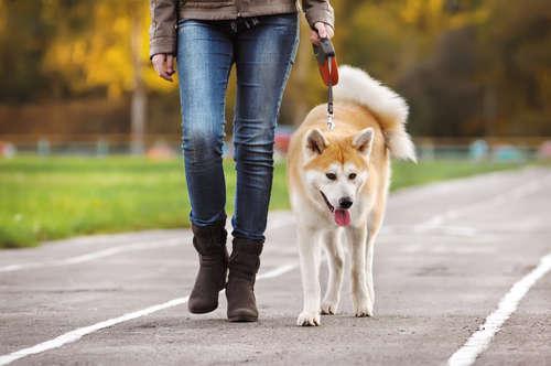 犬の散歩について。リーダーウォークのしつけ方