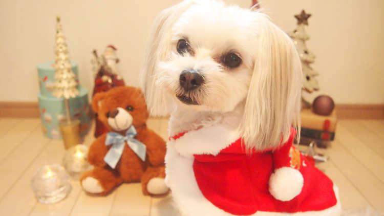 """愛犬・愛猫と一緒に過ごしたい冬のイベント""""クリスマス""""! ペティオの洋服でコスプレして楽しもう♪"""