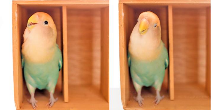 お気に入りの木箱にすっぽり入ったインコさん♪ 幸せそうな表情に、キュンとすると話題に…♡ 4枚