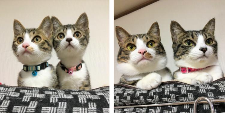 ピタっと密着していた子ネコたち♪ → 9ヶ月経っても変わらない仲の良さに、ホッコリが止まらない♡
