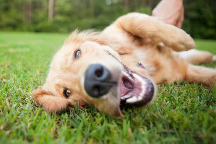 犬が甘える理由と、その心理について