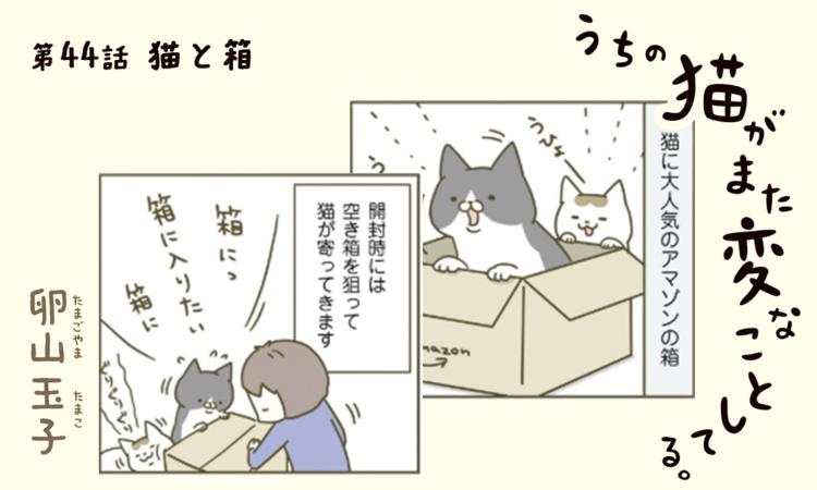 第44話:猫と箱