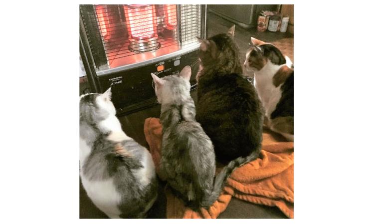 【これで見納め? 】ストーブで温まる猫たちの姿に…ストーブをしまうのを躊躇してしまう写真集♡7枚