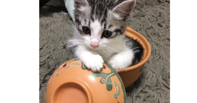 お鍋の中でくつろぐ猫たち。ピッタリサイズにご満悦な『鍋ねこ』をご覧ください(*´ェ`*)♡ 9枚