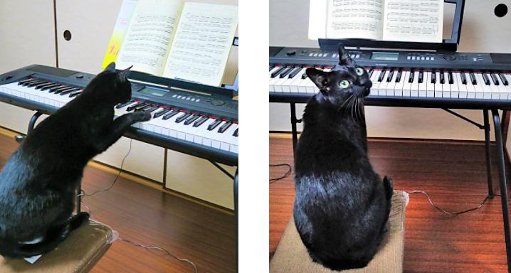 飼い主さんを真似して、ピアノを弾きたいニャンコ♪ ドキドキと鍵盤にさわる様子が…(*´ω`)♡ 4枚