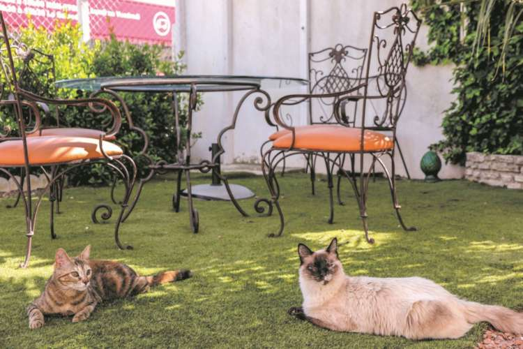 南仏猫カフェ巡り