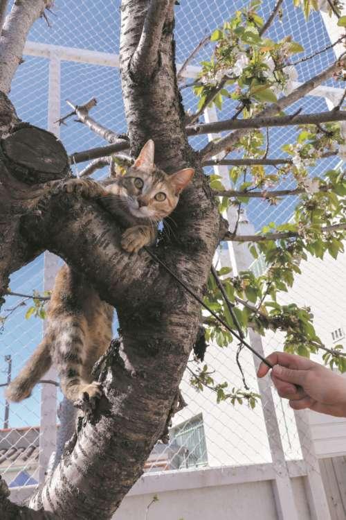 猫じゃらしで一気に木を駆け登る