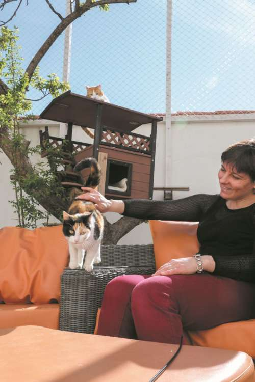 太陽の下で、バルバラさんと猫たち