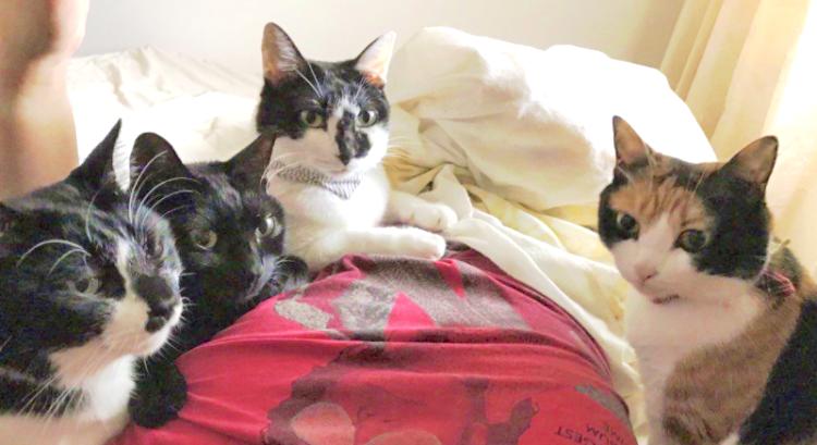 【視線が痛い】寝坊して猫たちの『朝ごはん』が遅れちゃった → 目を覚ました飼い主さんが見た光景が…