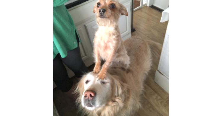 【ちょっとだけ我慢だワン!】同居犬に頭を貸したワンコ → おめめがだんだん閉じてゆく…(*´艸`*)