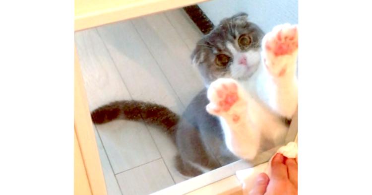 【絶対、捕まえるニャ♪】掃除中の飼い主さんの手が気になる猫。肉球をブンブンする姿が…(〃∇〃)♡