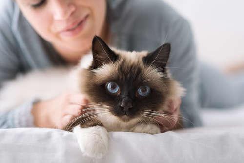 猫を飼うための基本を解説。迎え方から必要なもの、しつけまで
