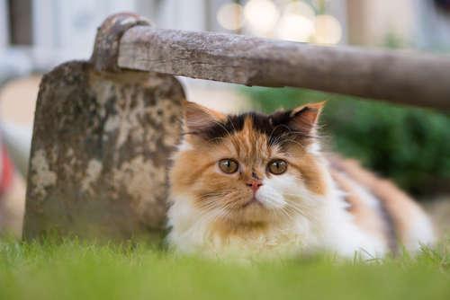 【獣医師監修】生後4ヶ月の仔猫の食事の種類や与え方、量について