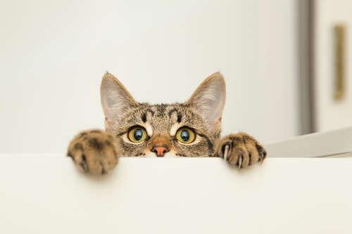 猫にタコは与えない方がよい。その理由について