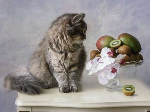 猫にキウイを与えていい?  猫とキウイの意外な関係と注意点