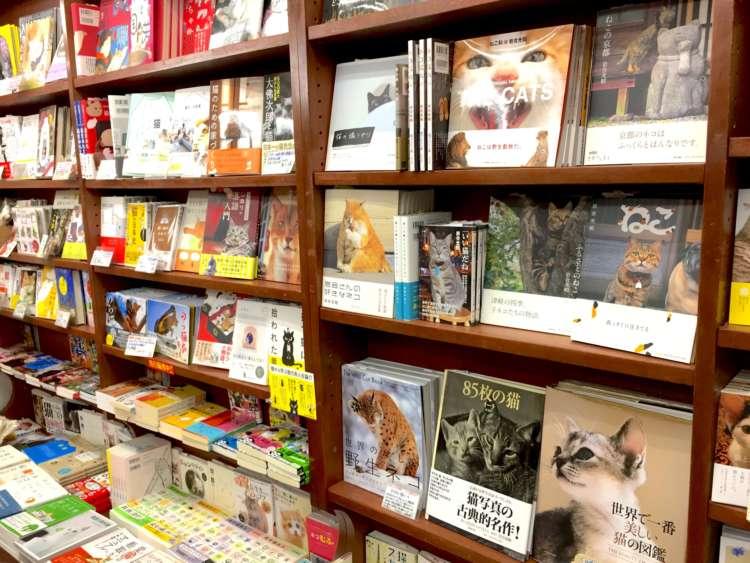 猫本専門「にゃんこ堂」に聞いてみた! 猫がもっと好きになる、おすすめの7冊♪