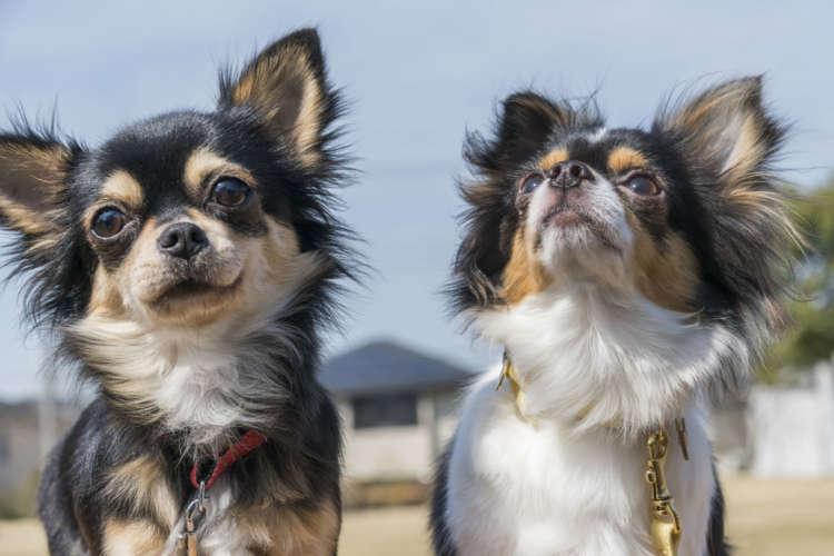知っておくと愛犬のキモチがわかる!?  犬の共通言語 カーミングシグナル