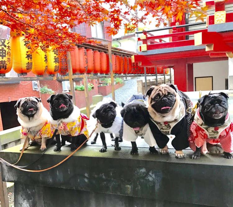 ワンコの健やかな成長を願って! 神社に「犬の七五三参り」に行こう