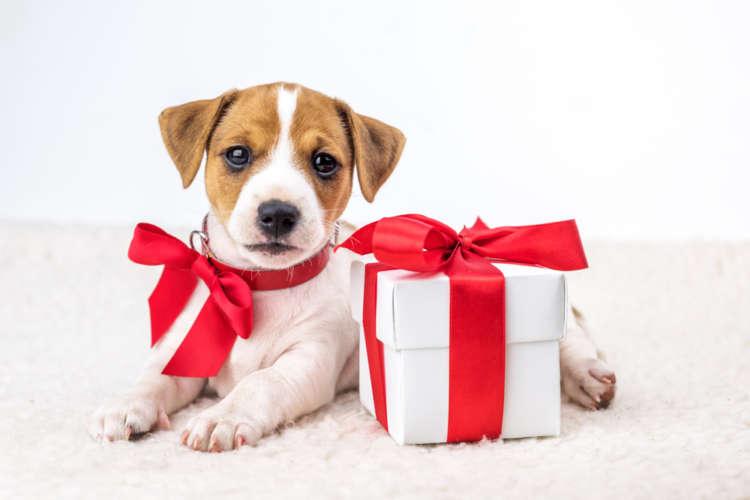 """今年一年の感謝を込めて! 愛犬にいつもと違う""""こだわり""""のプレゼントを贈ろう♪"""