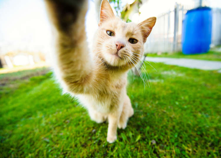 猫を自撮り風で撮影したい! 可愛く撮影する3つの方法について