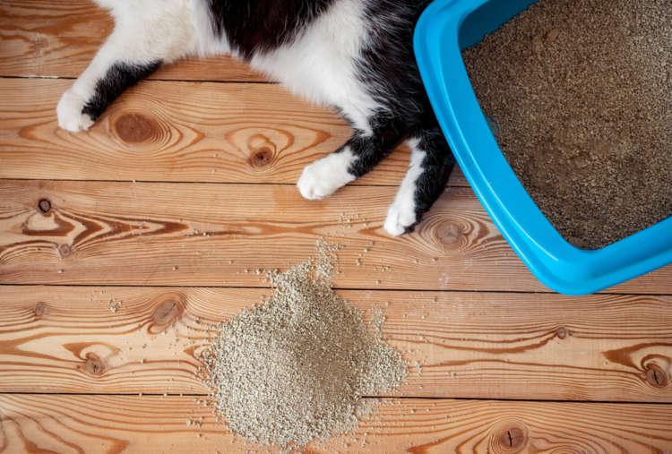 猫砂が飛び散って大変! 猫砂が飛び散る理由と対処法