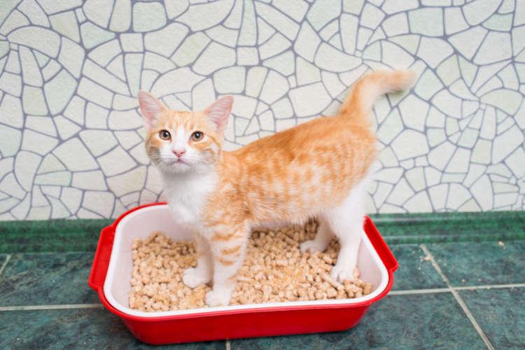 【獣医師監修】猫のお尻から白いものが出ている。それは条虫症かもしれません