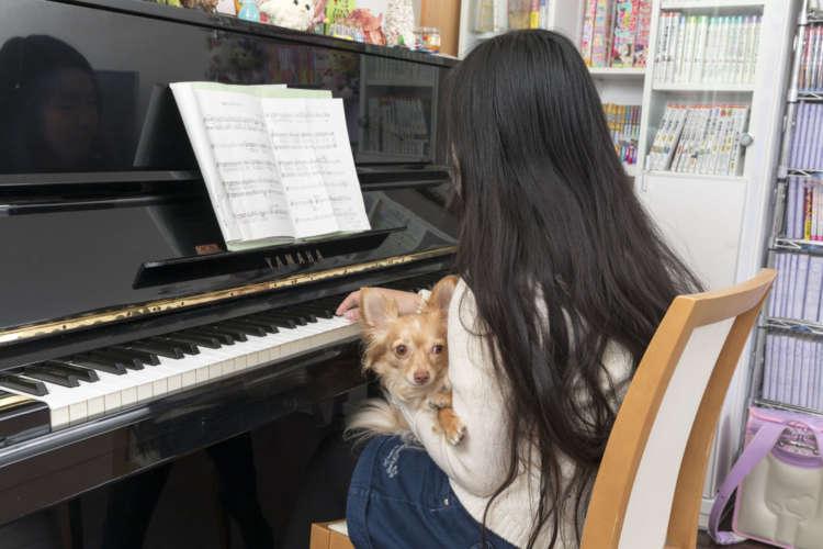 栞音さんが趣味のピアノをひいていると、「僕もかわいがってー」とすり寄ってきた。いや、かわいがっているのじゃなく、弾いているのだけど。しょうがないから膝の上に乗せる栞音さん。