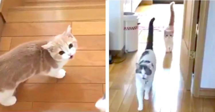 """『ごはん行く?』の一言に、""""声としっぽ"""" でお返事してくれる猫たち♪ ウキウキな姿が可愛すぎた♡"""