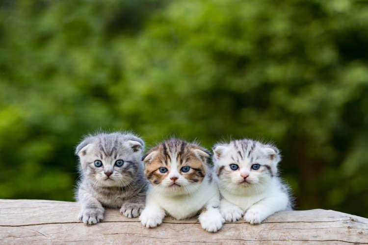 ミックス猫とも呼ばれる雑種の猫。どこで出会えるの?