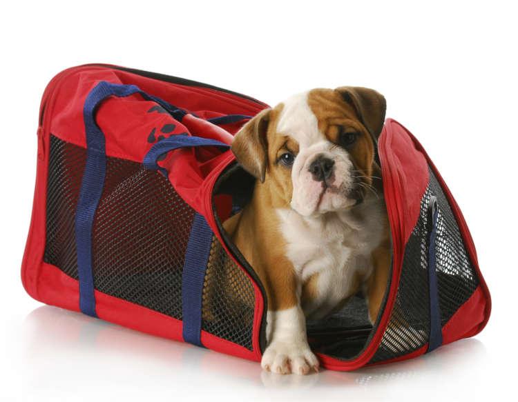 愛犬とお出かけ! キャリーバッグの種類と選び方