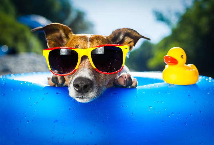 犬に快適な夏を! 犬のための冷房器具と暑さ対策グッズ