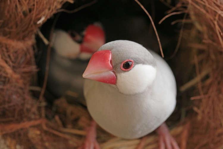 可愛い文鳥に名前を付けてあげよう! 文鳥の名付けのヒント集