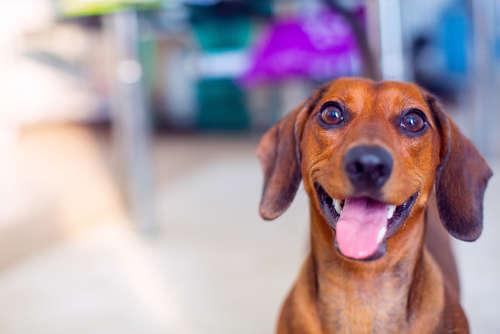 【獣医師監修】犬には、わさびなどの刺激物を与えてはいけません!