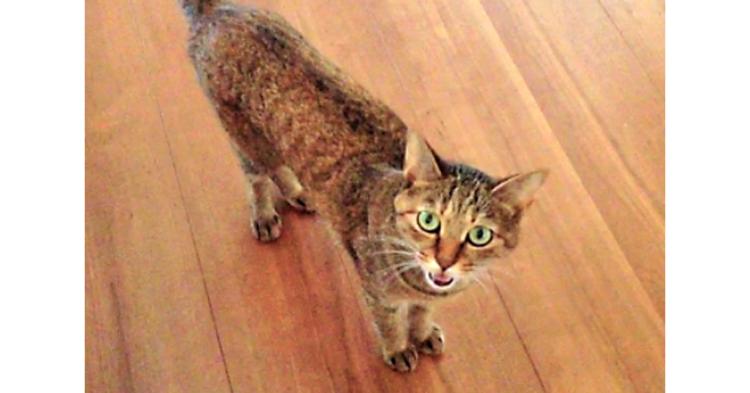 【おしゃべり上手♪】飼い主さんのお話を聞いて、お返事してくれるネコさん! かわいい会話にキュン♡