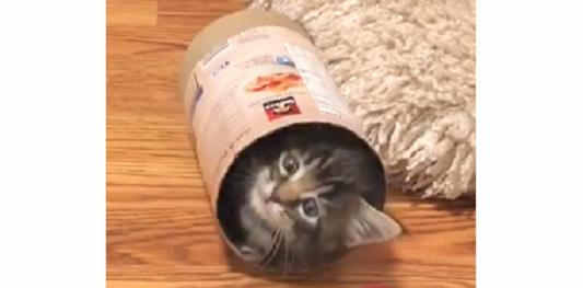 【コロコロするニャ!】動くと転がる『筒遊び』の楽しさに、魅了された子猫ちゃん。すると…(*´Д`)