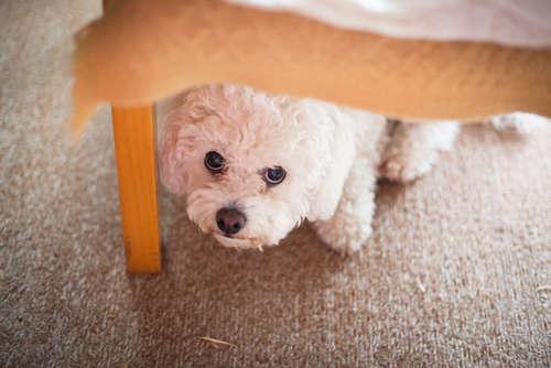 雷・人間・掃除機・シャワー…犬が怯える原因と対処法