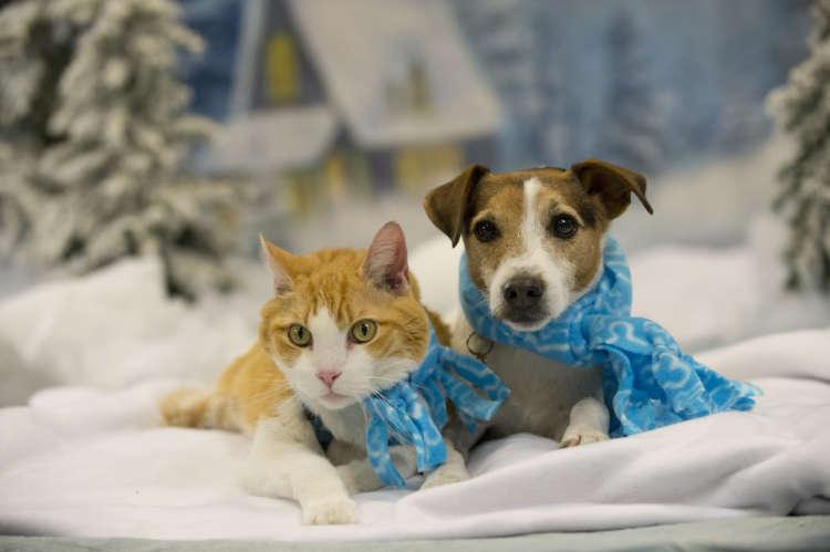 犬も猫も、冬を快適に過ごすには? ショップスタッフに聞く、おすすめ防寒グッズ