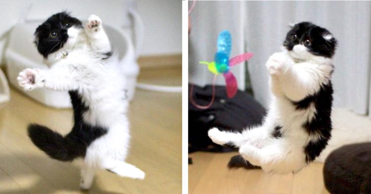 """激しく遊ぶ子猫を撮ったら『謎ポーズ』だらけに! """"不思議かわいい"""" と話題♪"""